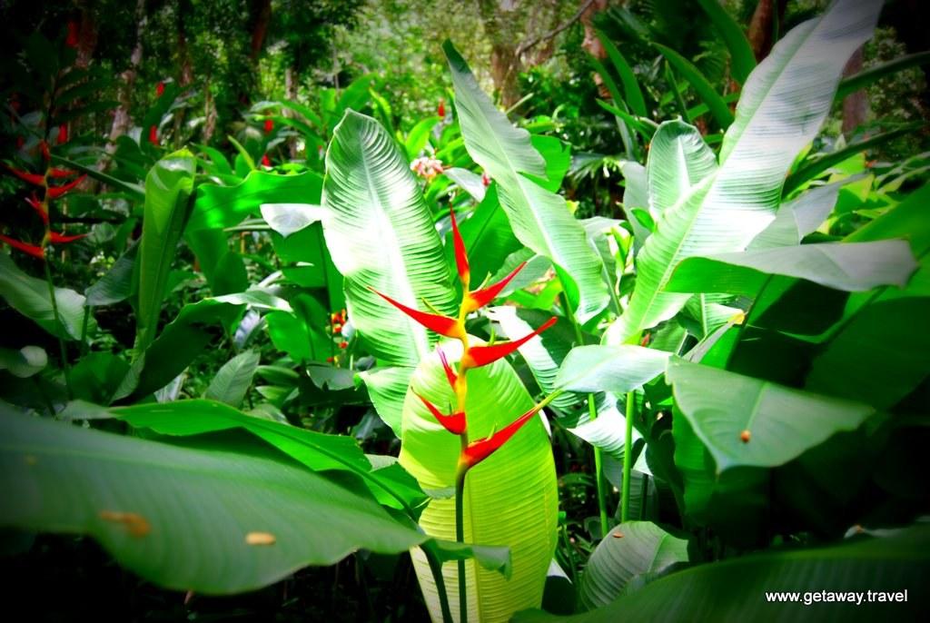 Garden-of-the-Sleeping-Giant-Fiji_10