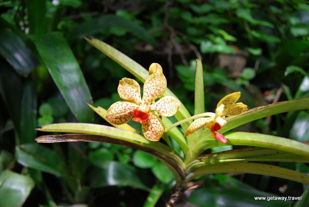 Garden-of-the-Sleeping-Giant-Fiji_2