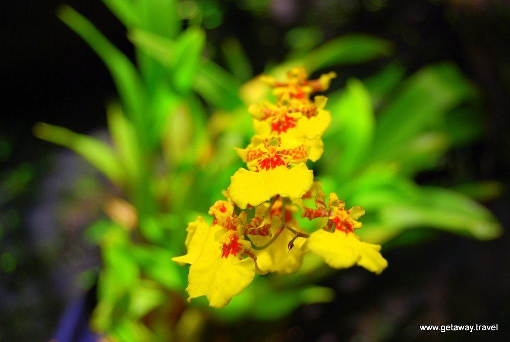 Garden-of-the-Sleeping-Giant-Fiji_3