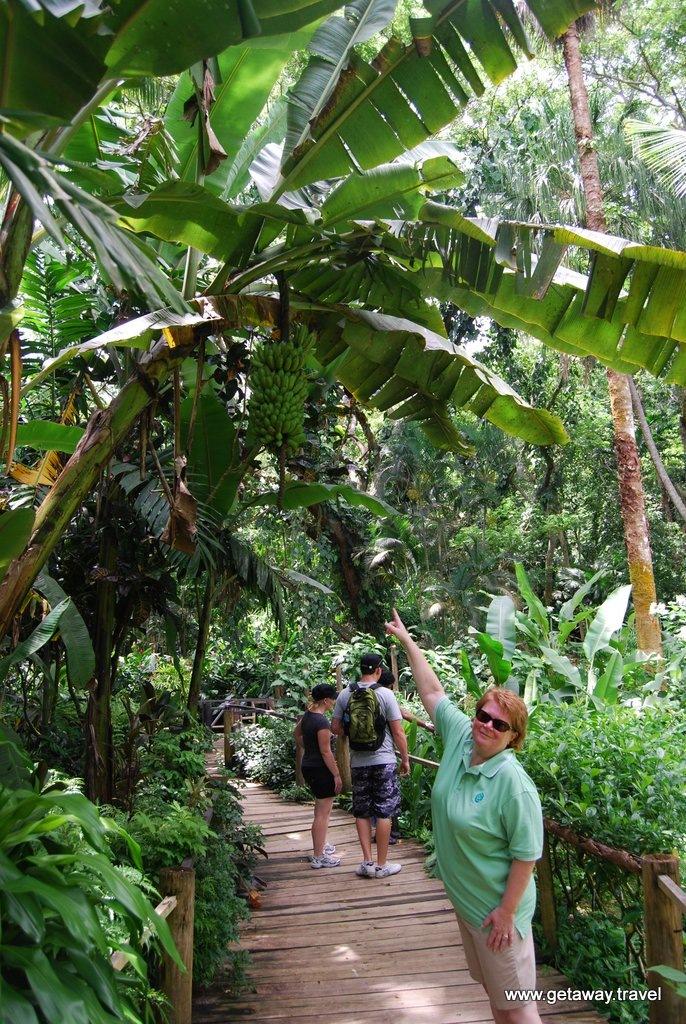Garden-of-the-Sleeping-Giant-Fiji_6